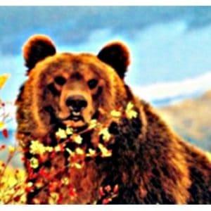 נוזל לסיגריה אלקטרונית - grizzly
